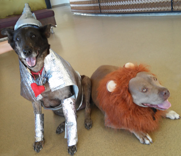 Scout and Sophie show their heart and courage.